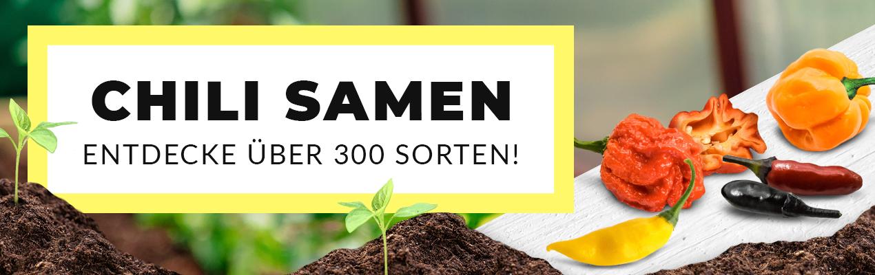 100stk Samen Selten Schwarz Chili Pfeffer Jalapenosamen Fruchtig DE