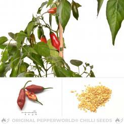 Aji Red Hot Pyosil Chilisamen