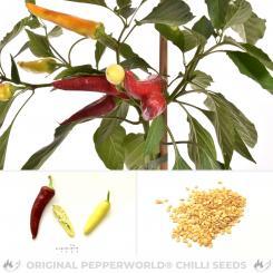 Aji Blanco Cristal Chili Seeds