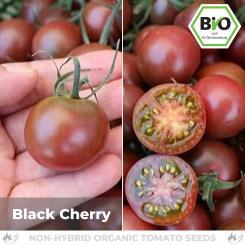 Organic Black Cherry Tomato Seeds (Cocktail Tomato)