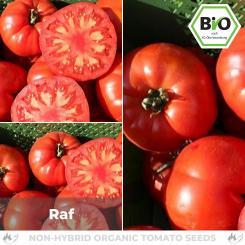Organic Raf tomato seeds (meaty tomato)