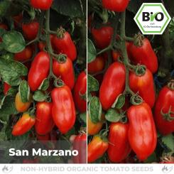 Organic San Marzano tomato seeds (Sauce tomato)