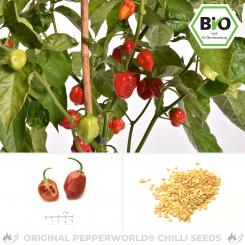 Organic Caribbean Red Chilli Seeds