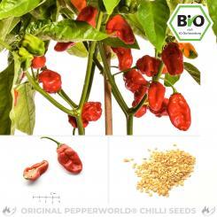 BIO NuMex Suave Red Chilisamen