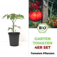 Garten Tomaten Set - BIO Tomatenpflanzen