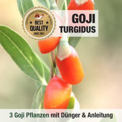 Goji Beeren Pflanze Turgidus 3er Anbauset