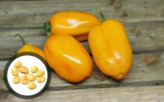 Grenada Seasoning Chilisamen