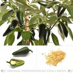 Jalapeno Jalastar Chili Seeds