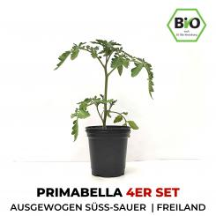 Primabella BIO Cocktail-Tomatenpflanzen 4er Set