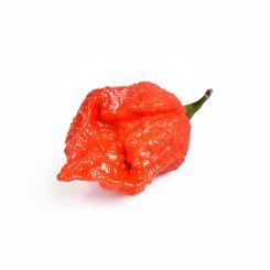 Frische Chili RachenReibe, 3 Stück