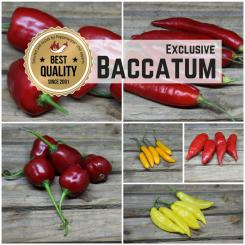 Seed Assortment 'Baccatum Boost'