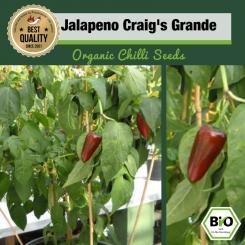 Organic Jalapeno Craig's Grande Chilli Seeds