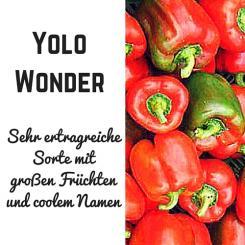 Yolo Wonder Paprika