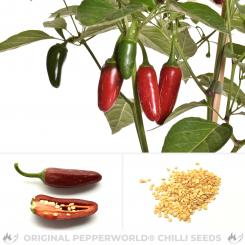 TAM Jalapeno Chili Seeds