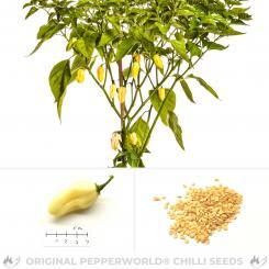 White Bhut Jolokia Chilli Seeds