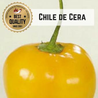 Chile de Cera BIO Chilipflanze