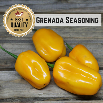 Grenada Seasoning BIO Chilipflanze