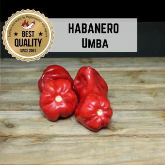Habanero Umba BIO Chilipflanze