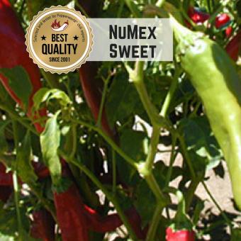 NuMex Sweet Chilisamen