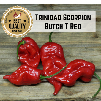 Trinidad Scorpion Butch T Red BIO Chilipflanze