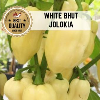 White Bhut Jolokia BIO Chilipflanze