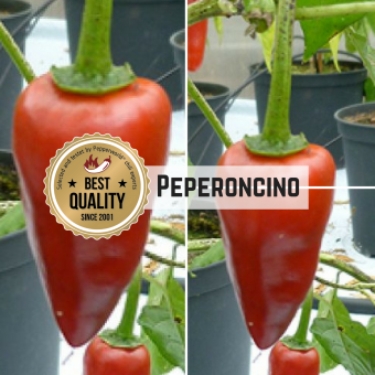 Peperoncino Chilisamen