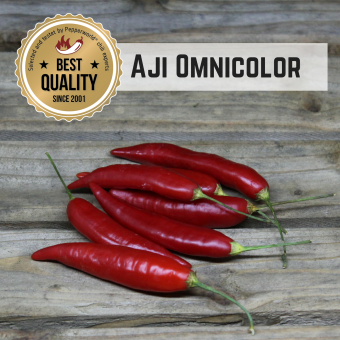Aji Omnicolor BIO Chilipflanze