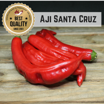 Aji Santa Cruz BIO Chilipflanze