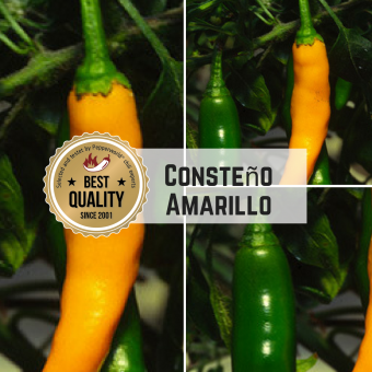 Costeno Amarillo Chilisamen