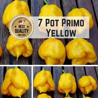 7 Pot Primo Yellow BIO Chilipflanze