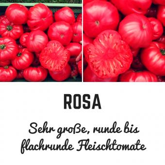 Rosa Tomatensamen (Fleischtomate)