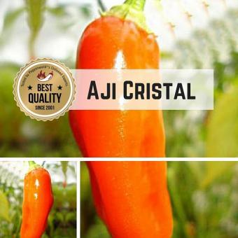 Aji Cristal Chilipflanze