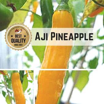 Aji Pineapple Chilipflanze