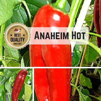 Anaheim Hot Chilipflanze