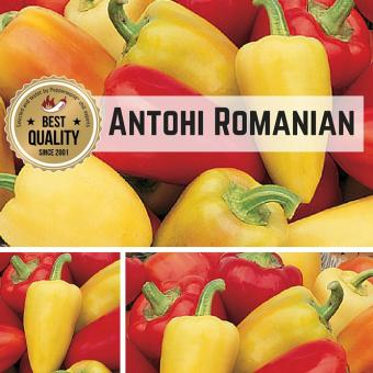 Antohi Romanian Chilisamen