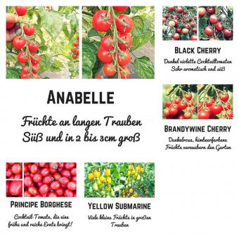Bio Saat Sortiment Kirschtomate- 5 extrem leckere Tomatensorten für einen traumhaften Salatgenuss