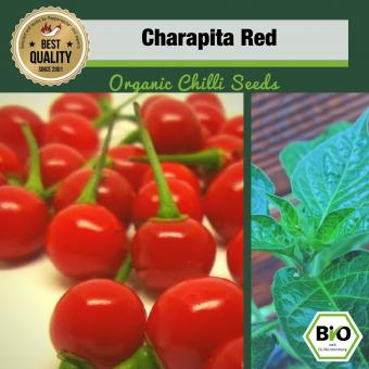 Organic Charapita Red Chilli Seeds