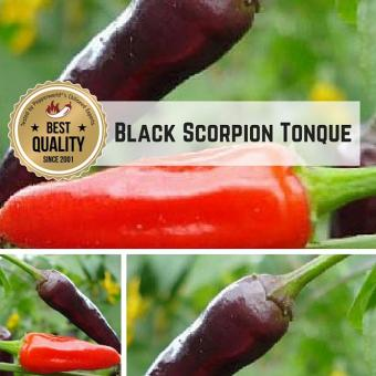 Black Scorpion Tongue BIO Chilipflanze