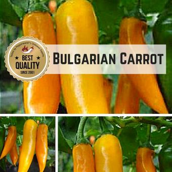 Bulgarian Carrot Chilipflanze