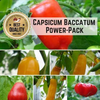 Capsicum baccatum BIO Pflanzen-Power-Pack