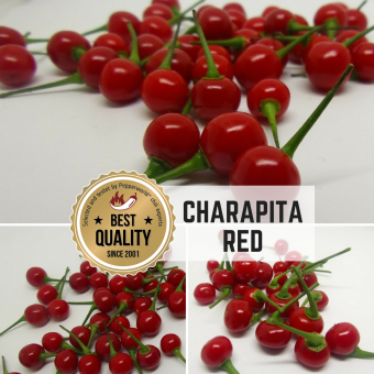 Charapita Red Chilli seeds