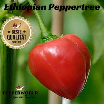 Ethiopian Peppertree Chilisamen