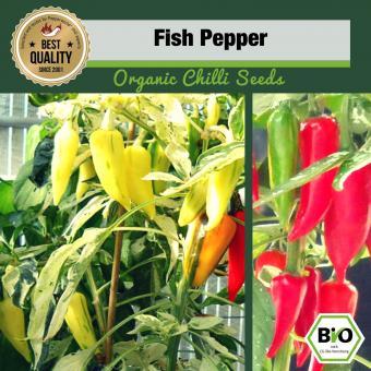 BIO Fish Pepper Chilisamen