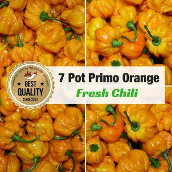 Frische Chili 7-Pot Primo Orange, 100g