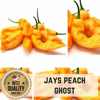 Jays Peach Ghost Chilli plant