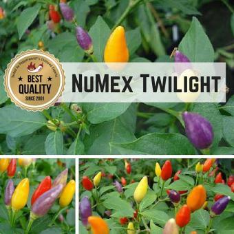 NuMex Twilight BIO Chilipflanze