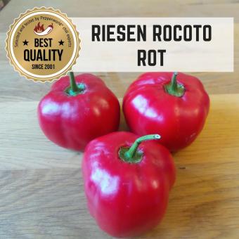 Rocoto Riesen Rot BIO Chilipflanze
