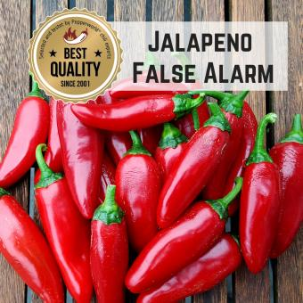Jalapeno False Alarm BIO Chilipflanze