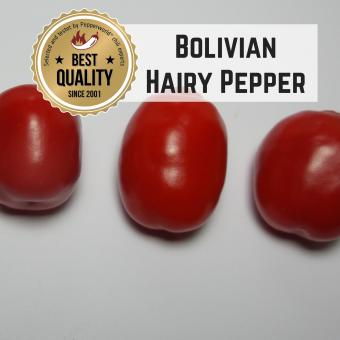 Bolivian Hairy Pepper BIO Chilipflanze