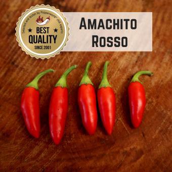 Amachito Rosso BIO Chilipflanze